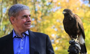 Author with the Harris's hawk